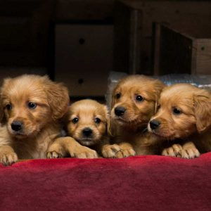 Haustierfotografie-000
