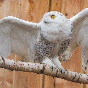 Vogelpark-Fotokurs-07